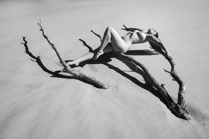 Carlotta Champagne Beach Tree