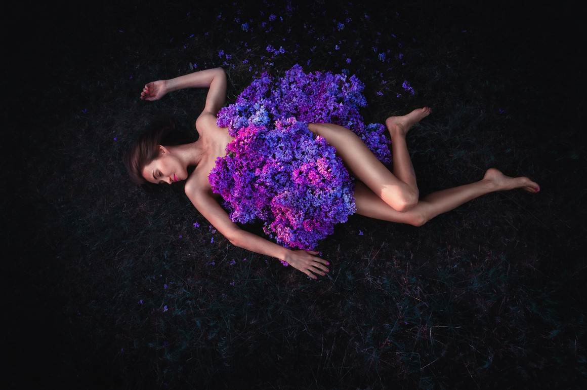 Lilac dream 1